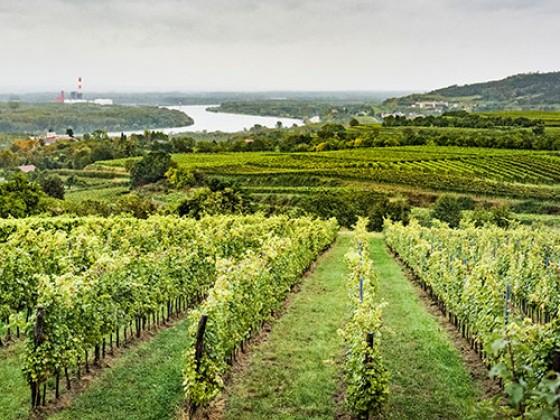 Ur-Werk Wein